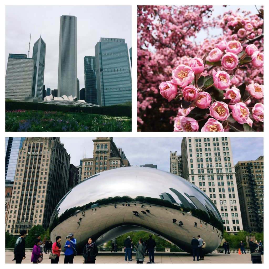 Walking Chicago, The Chicago Bean, Flowers in Chicago, Millennium Park Chicago